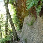 A rock wall in Lyrebird Gully (376733)