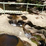 Top of Lyrebird Waterfall  (boardwalk washed away in 2012) (376937)