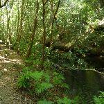 Track beside Calna Creek (377897)