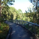 Boardwalk beside the Lane Cove River (383591)