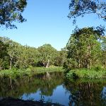 The Lane Cove River near Ironbarks Picnic Area (384143)