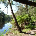 Lane Cove River south of Cottonwood Glen (384485)