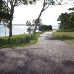 The Foreshore Track alongside Lake Macquarie (389351)