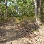 Eucalypt forest Green Point Reserve (389615)