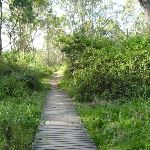 Timber boardwalk near Green Point on Lake Macquarie (389648)