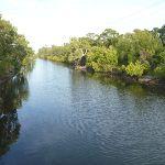 Creek at Belmont lagoon (390137)