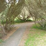 Foot path on the Owens Walkway near Cain St in Redhead (390803)