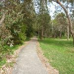 Footpath through forest on the Owens Walkway in Redhead (390923)