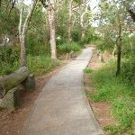 Footpath on the Owens Walkway in Redhead (390971)