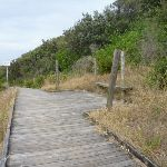 Timber boardwalk and seat on the Owens Walkway in Redhead (391214)