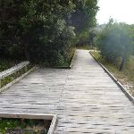 Timber boardwalk and seat on the Owens Walkway in Redhead (391217)