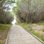 Timber boardwalk on the Owens Walkway in Redhead (391265)