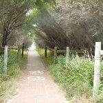 Footpath through forest on the Owens Walkway in Redhead (391271)