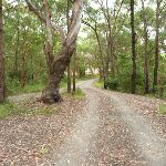 Awabakal car park near Dudley in the Awabakal Nature Reserve (391673)