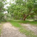 Open area with large tree and picnic table in Awabakal Nature Reserve (391706)