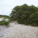 Small sandy track near the Awabakal Viewpoint (391808)