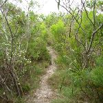 Track through vegetation in the Awabakal Nature Reserve (392096)