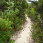 Track on the Awabakal Coastal Walk (392120)