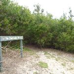 Sign and track into the Awabakal Nature Reserve (392285)