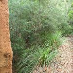 Dry forests on ridge in the Lane Cove Valley (392459)