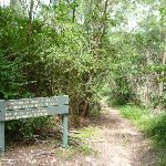 Well signposted section in Lane Cove NP (392627)