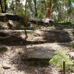 The rocky track on Lane Cove Valley (392735)