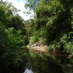 The Lane Cove River near Avondale Creek (393533)