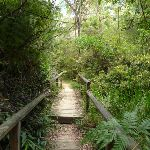 Boardwalk north of Avondale Creek (393650)