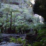 The cliffs and fern grotto at the western end of the tunnel (39589)