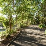 Level trail at Carnley Reserve in the Blackbutt Reserve (399331)