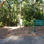 Track to Rain Forest in Blackbutt Reserve (399523)