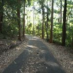 Leafy trail in Blackbutt Reserve (399562)