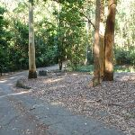 Small picnic area in the Blackbutt Reserve (399610)