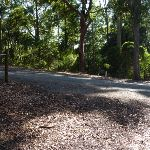 Trail down into forest in from Main Ridge in Blackbutt Reserve (399874)