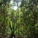 Attractive plants on the Main Ridge Walk in Blackbutt Reserve (399964)