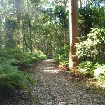 Attractive fern forest in Blackbutt Reserve (400015)