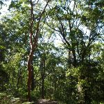 Views through the forest in the Blackbutt Reserve (400027)