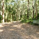 Trail into the forest on the Blueberry Ash Trail in the Blackbutt Reserve (400081)