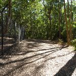 Metal fence and trail in Blackbutt Reserve (400168)