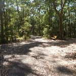 Wide sealed trail in the Blackbutt Reserve (400240)