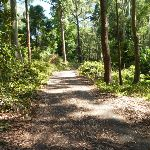 Trail through forest in Blackbutt Reserve (400378)