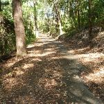 Uphill trail in Blackbutt Reserve (400480)