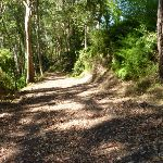 Trail in Blackbutt Reserve near Lookout Road (400540)