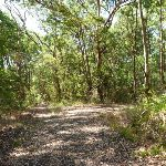 Trail intersection near Bower Bird Creek in Blackbutt Reserve (400741)
