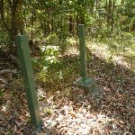Green metal posted near Bower Bird Creek in Blackbutt Reserve (400744)