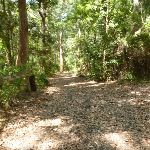 Trail through forest in Blackbutt Reserve (401044)