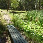 Seating bench beside Lily Pond in Blackbutt Reserve (401143)