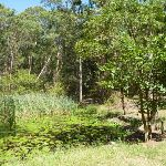 Lily Pond Picnic Area in Blackbutt Reserve (401158)