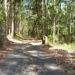 Forested trail near Mahognay Picnic Area in Blackbutt Reserve (401185)