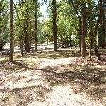 Mahognay Picnic Area in Blackbutt Reserve (401209)